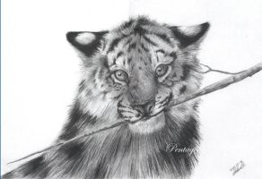 Study of a tiger cub by Noukah