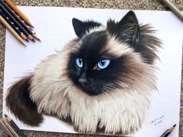 Pencil drawing of a subscriber's pet #2 by JasminaSusak