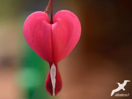 a Heart of spring by albatros1