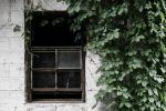 Rustic Window with Ivy by charlesheadphotos