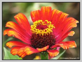 Fire Flower by picworth1000wrds