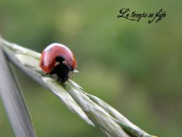 Pretty Ladybird by le-temps-se-fige
