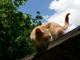 Cat on the roof 3 by Aslehill12
