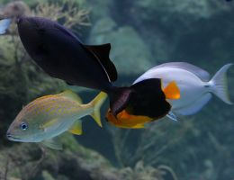 Tropical fish 20D0024119 by Cristian-M