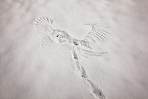 Snow Angel by harald-muehlhoff