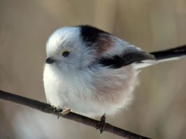 Long-tailed tit 2 by melodi996
