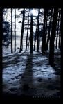 Shadows of Snow by DiTommi