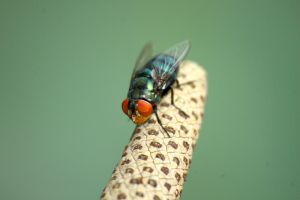 Flies by esthetic-of-sight