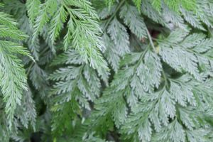 Close Up of a fern plant 2 by rodericklal