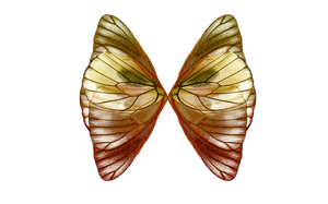 PNG WINGS 2 by Moonglowlilly