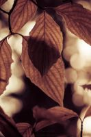 Rust.Leaves.Bokeh by Suinaliath