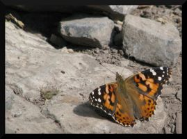 Palisade's Butterfly I by PurlyZig