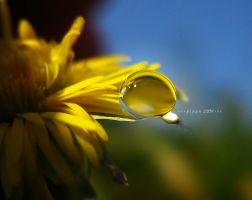 golden droplet by sinanTR