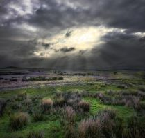 Darkest depths of Dartmoor by fairieswatchoverme