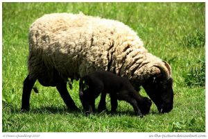 Black Sheep of the Family by In-the-picture