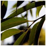 Leaf, Late Sunday by ashali