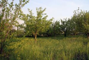 Garden trees and grass stock #2 by croicroga