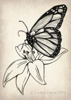 Butterfly on Lily by PrinceDamian92