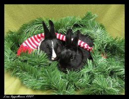 Holiday Bunnies by Cillana