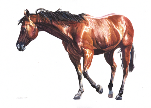 Watercolour Horse by In-The-Distance
