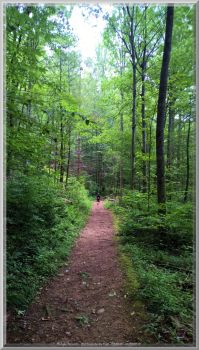 Old Sugarlands Trail Scenery 25 by slowdog294