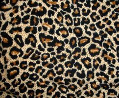 Leopard tex II by Comacold-stock