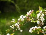 Branch of Flowers by GianniMiquini
