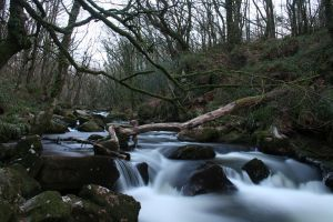Golitha Falls 2 by jm2003uk