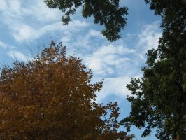 Trees and Sky by arien-the-maia
