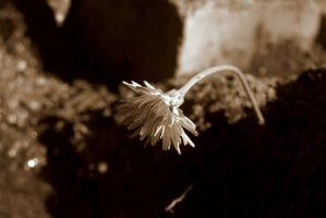 lonely flower by millii