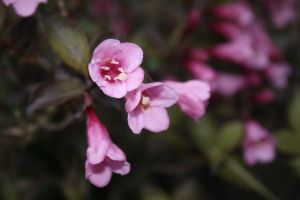 Pink flowers 2 by photohouse