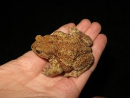 another_toad by InkOut