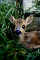 Bambi by Yetialex