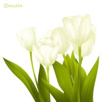 Tulips by lanitta