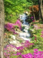 Flowery Falls by T-Anne-Hallows
