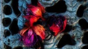 Faded Fuschia Flowers by graphic-rusty