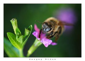 Bee by sergey1984