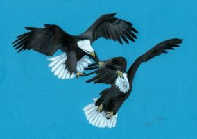 2 bald eagles Colored pencil drawing on blue paper by JasminaSusak