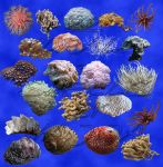 22 corals + shells stock by aswad-hajja