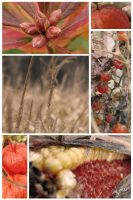 autumn collage by Tyc01101