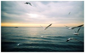 seagulls by lomo by fairylike