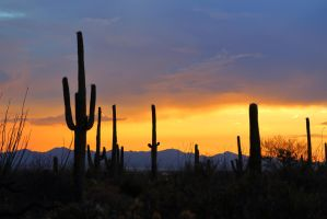 Saguaro Sunset 1108 by mammothhunter