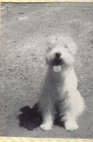 Dog by Glo-Stock-Vintage