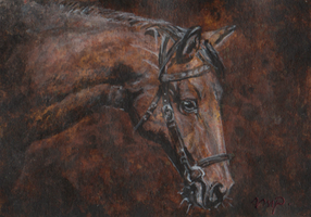 aceo horse portrait by kailavmp