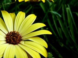 Bright yellow happiness by Mosterdmuisje