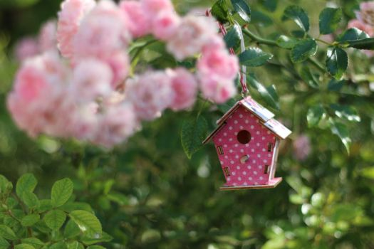 Birdhouse Stock 02 by Malleni-Stock