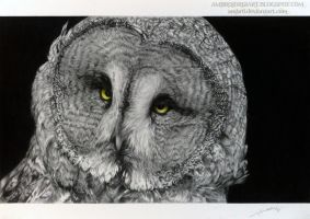 Great Grey Owl by AmBr0