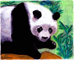 panda No 1 - oil pastels by EwaBlackWidowVsHare