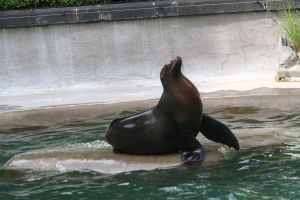 seal in Zoo cologne by ingeline-art