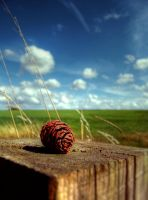 pine cone by disfractional